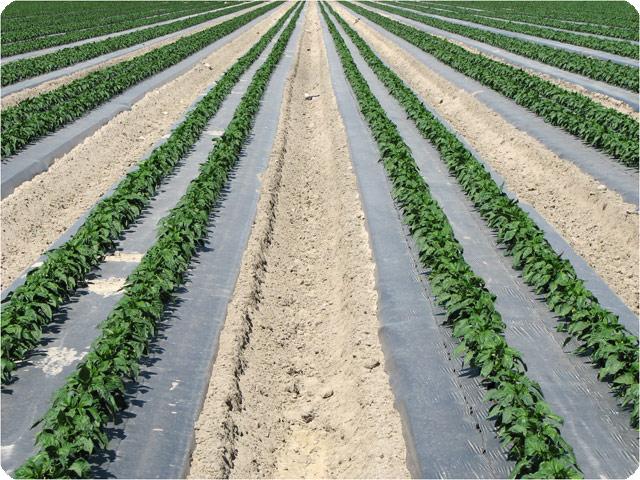Planificación-Agrícola-Cingral